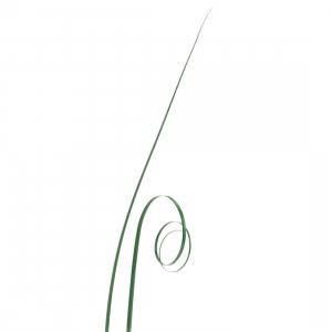 Culpitt Bear Grass - Green (Pack of 50)