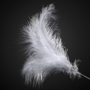 Club Green Feather Spray - White (Pack of 12)